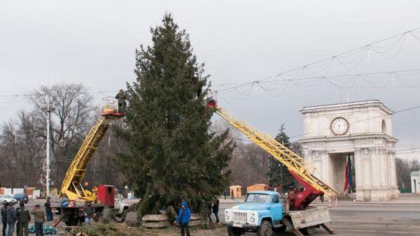 Sărbătorile vin, sărbătorile vin. Pomul de Crăciun pornește spre Chișinău