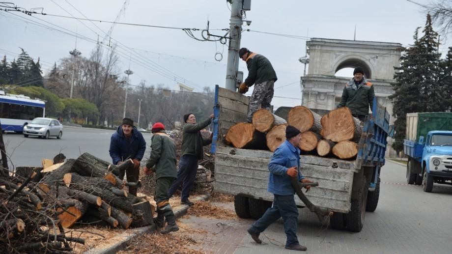 (foto) Mâine la Chișinău vor avea loc lucrări de curățare a arborilor. Care sunt străzile vizate