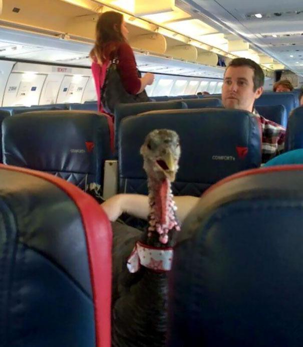 animals-on-a-plane-100-59f326b55b527__605