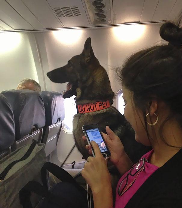 animals-on-a-plane-103-59f32a72c97cc__605