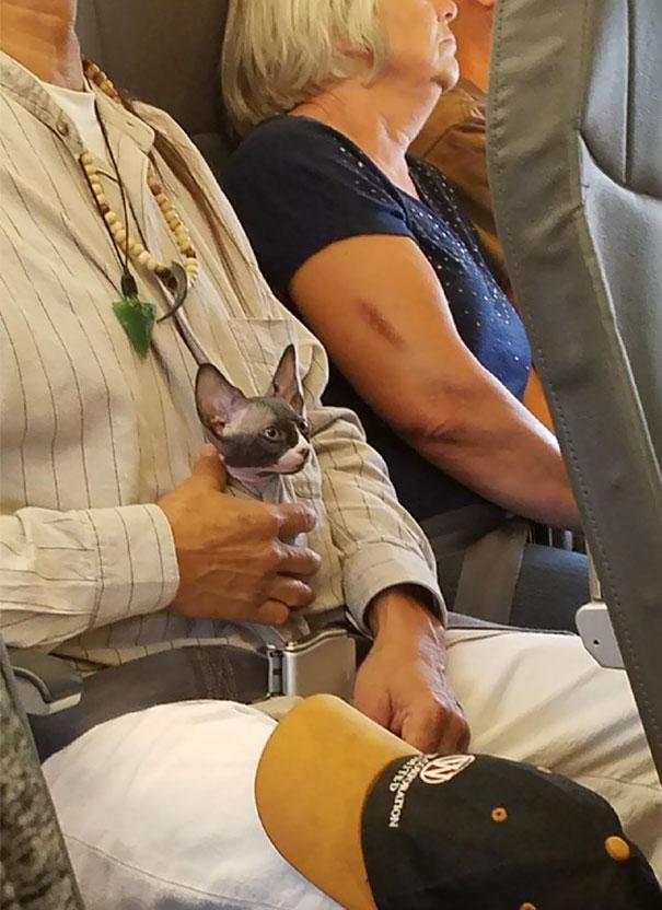 animals-on-a-plane-251-59f334f3a1335__605