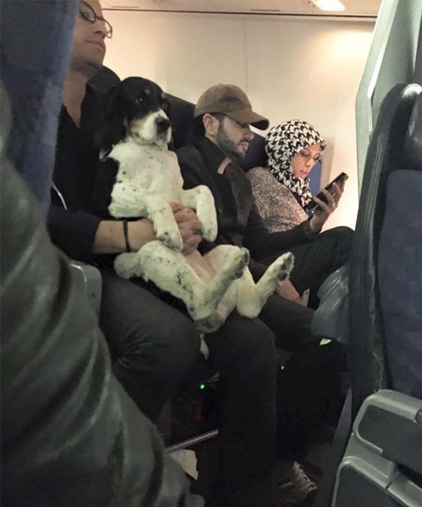animals-on-a-plane-253-59f3386c9f66a__605
