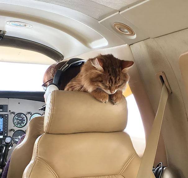 animals-on-a-plane-51-59f2d52c031ee__605