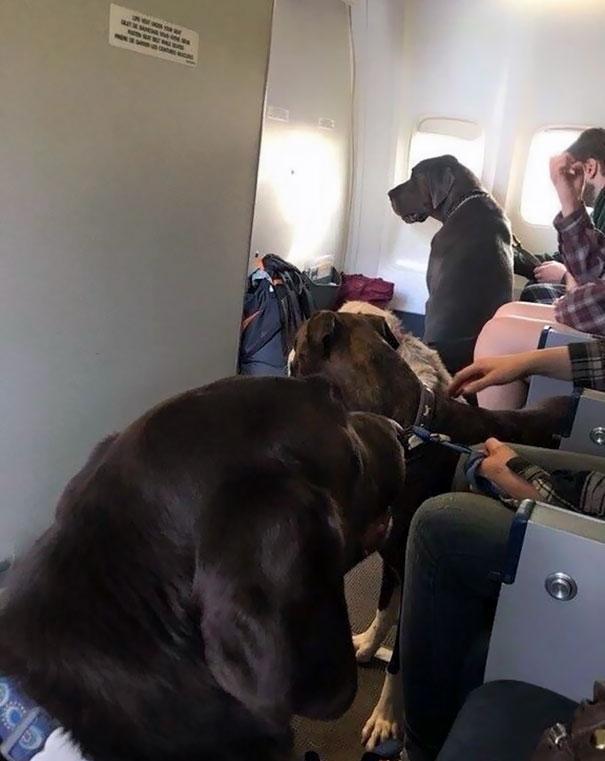 animals-on-a-plane-52-59f2d5c7ac8ef__605