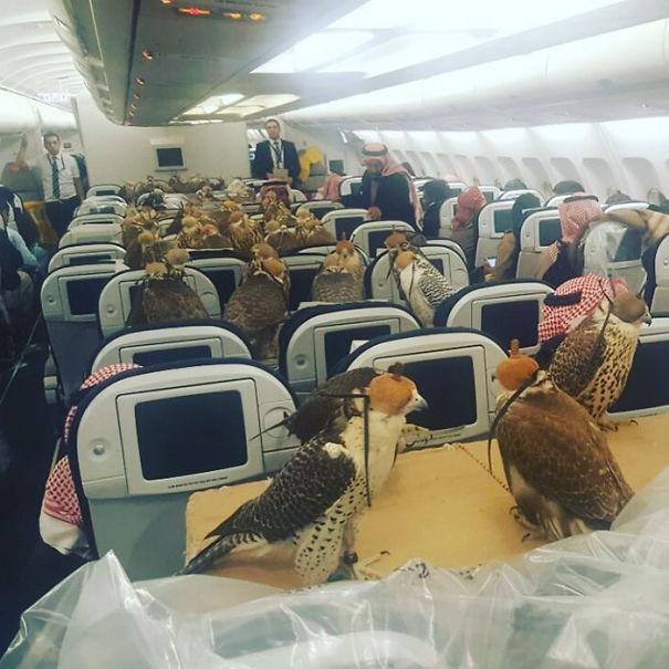 animals-on-a-plane-62-59f2e3c09e670__605