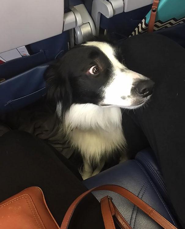 animals-on-a-plane-64-59f2e702ed55a__605