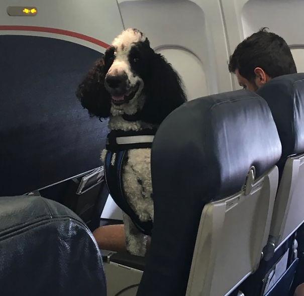 animals-on-a-plane-7-59f33b8b0f7cd__605