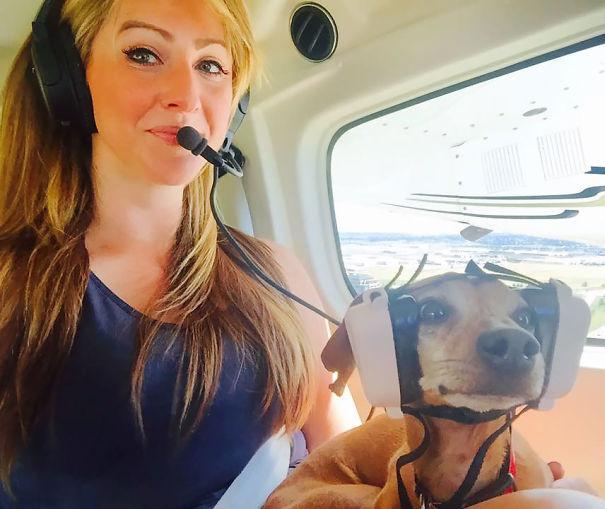 animals-on-a-plane-77-59f2fd23b7442__605