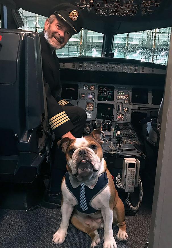 animals-on-a-plane-79-59f2ffafd0455__605