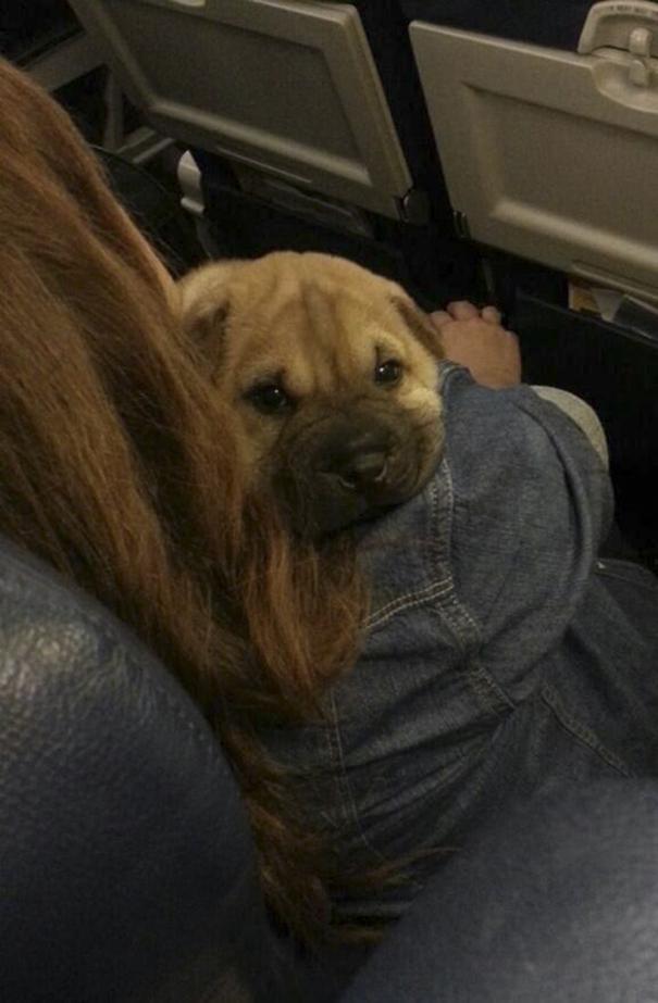 dog-on-the-plane-150-59f33a5451b72__605