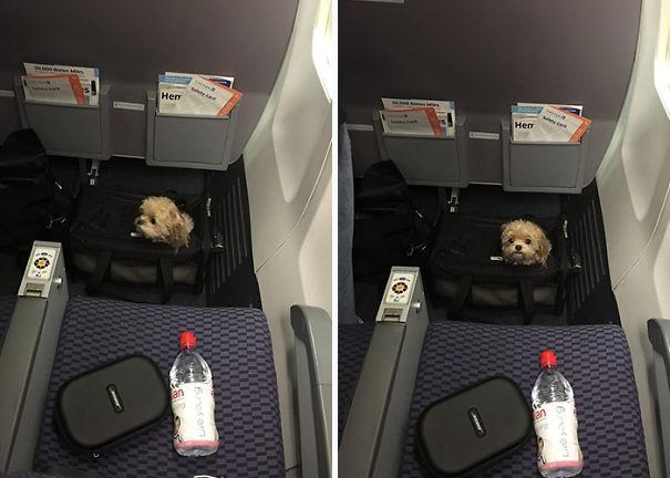 dog-on-the-plane-152-59f33baca21cc__605