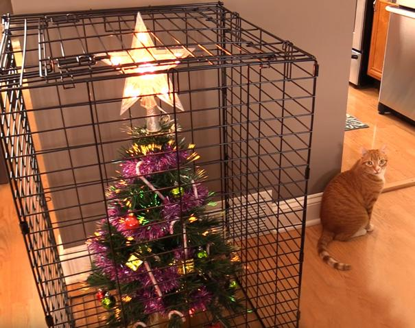 protecting-christmas-tree-from-dogs-cats-pets-4-585a611c97b73__605