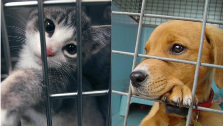 Îți plac animalele? Scrie un eseu despre adopția celor fără adăpost și primește o bursă în valoare de 1500 dolari