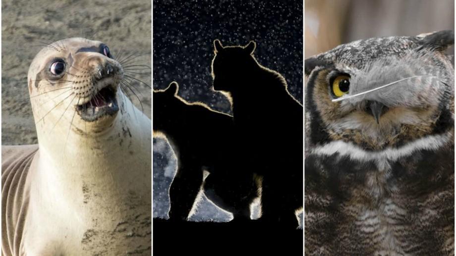 (foto) Cele mai amuzante fotografii ale lumii sălbatice din anul 2017, potrivit Comedy Wildlife Photography Awards
