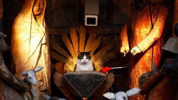 (foto) Christmas Cat. Trebuie să știi cum să-ți dai importanță, iar pisicile fac asta cel mai bine