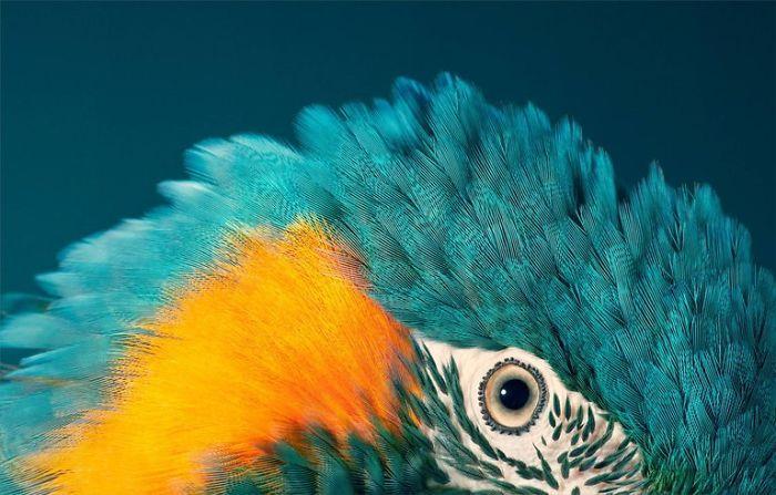 endangered-animals-tim-flach-5a45f64bb4bc2__700