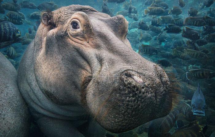 endangered-animals-tim-flach-5a45f7e453c51__700