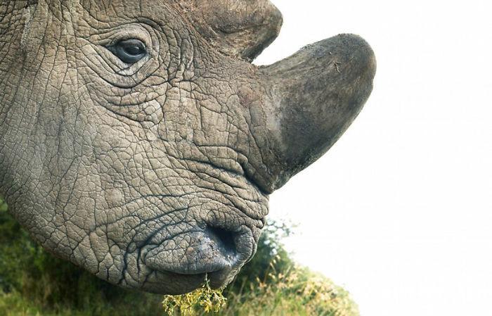endangered-animals-tim-flach-5a45f86a562bc__700