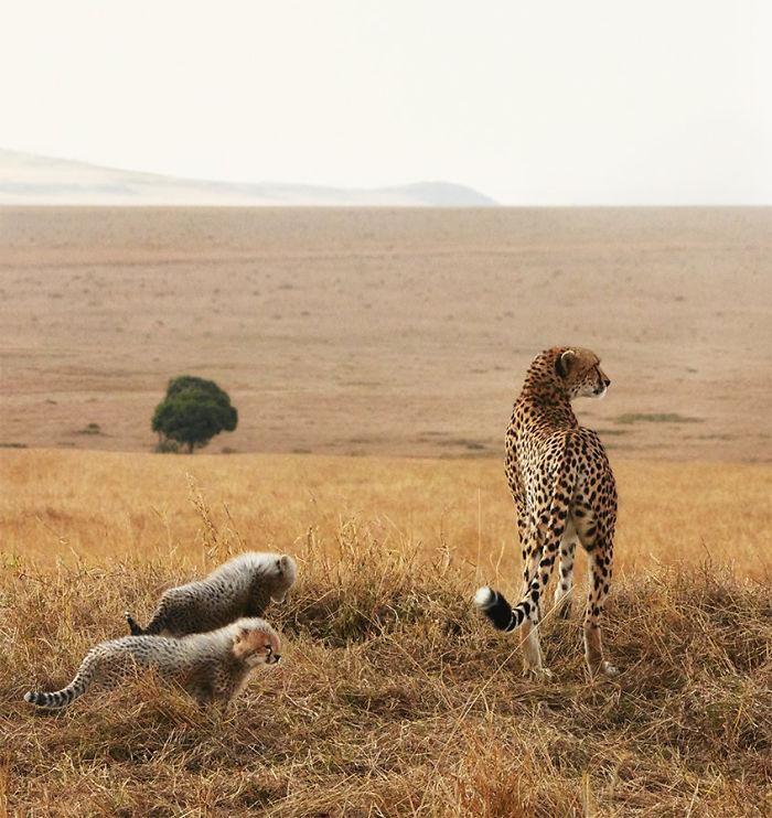 endangered-animals-tim-flach-5a45f9c2db4c7__700