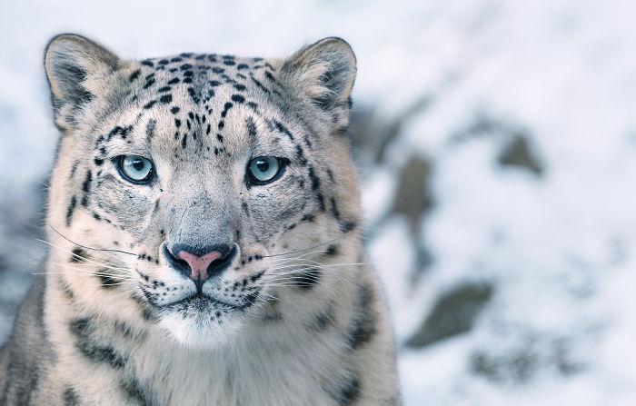 endangered-animals-tim-flach-5a45f9fc4d250__700
