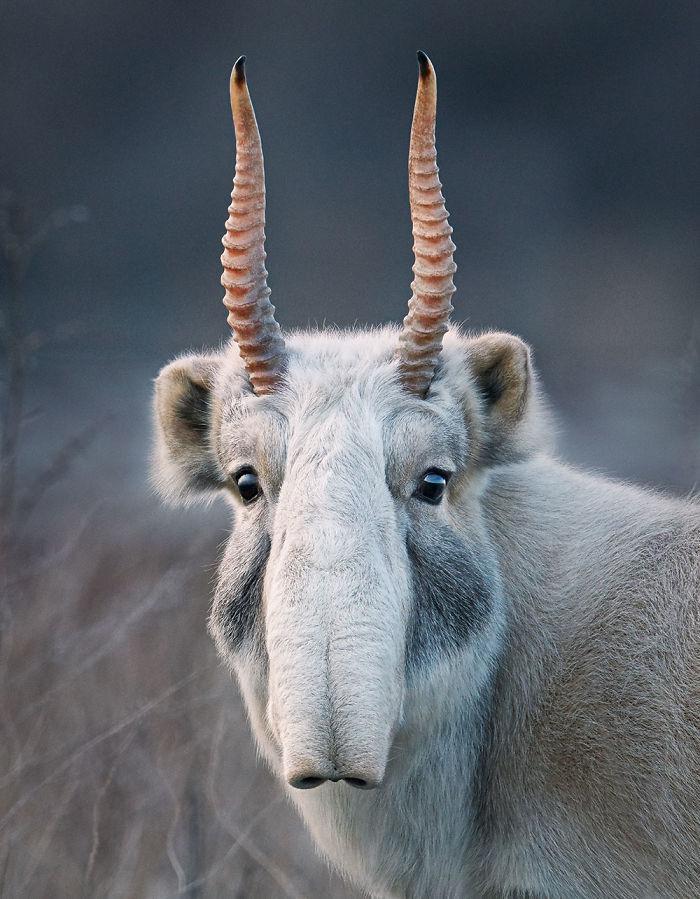 endangered-animals-tim-flach-5a45fa2a48ab2__700