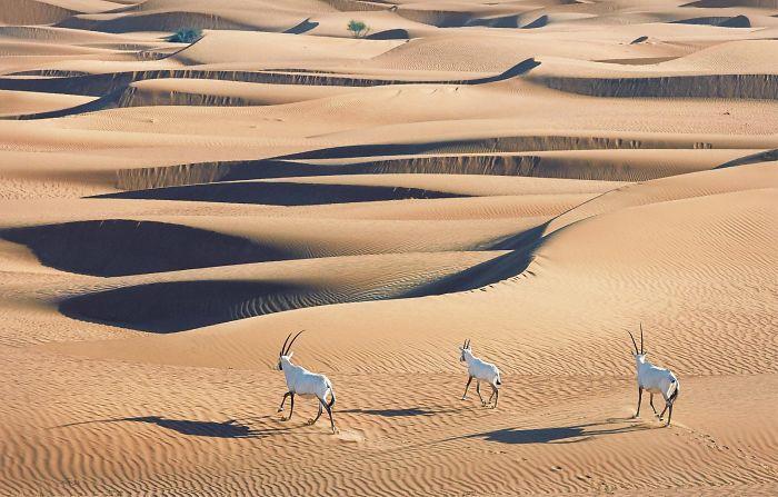 endangered-animals-tim-flach-5a45fa8bdc160__700