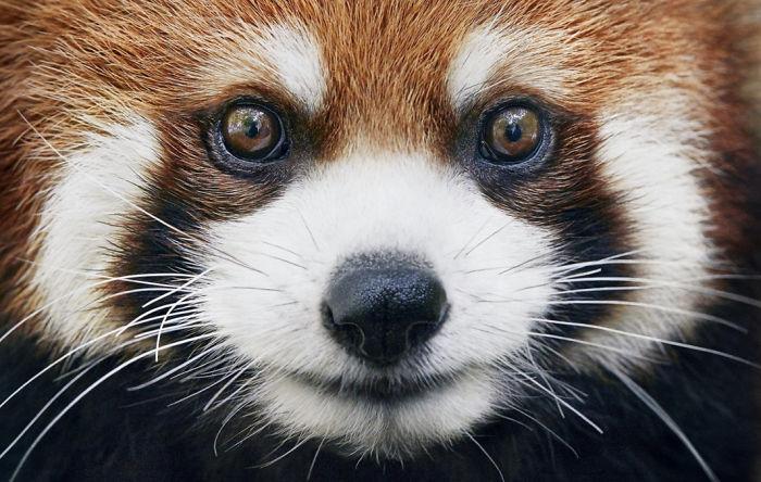 endangered-animals-tim-flach-5a45fe47d1250-png__700