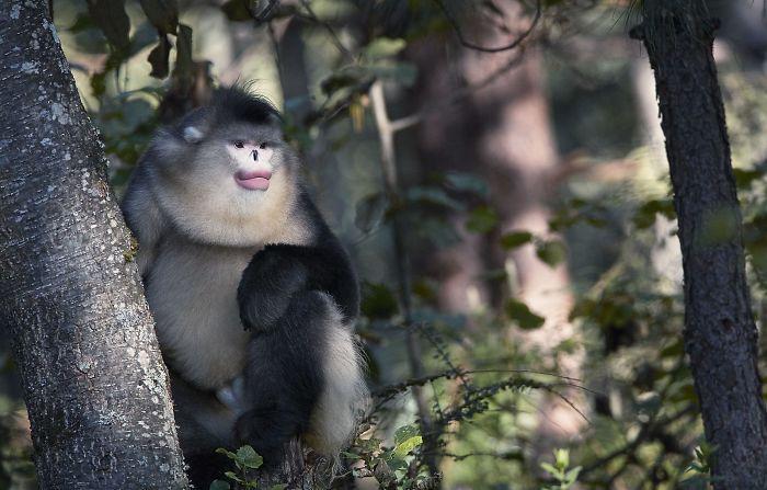 endangered-animals-tim-flach-5a45fe8507315__700