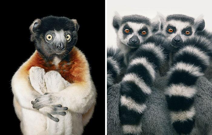 endangered-animals-tim-flach-6-5a460121c7533__700