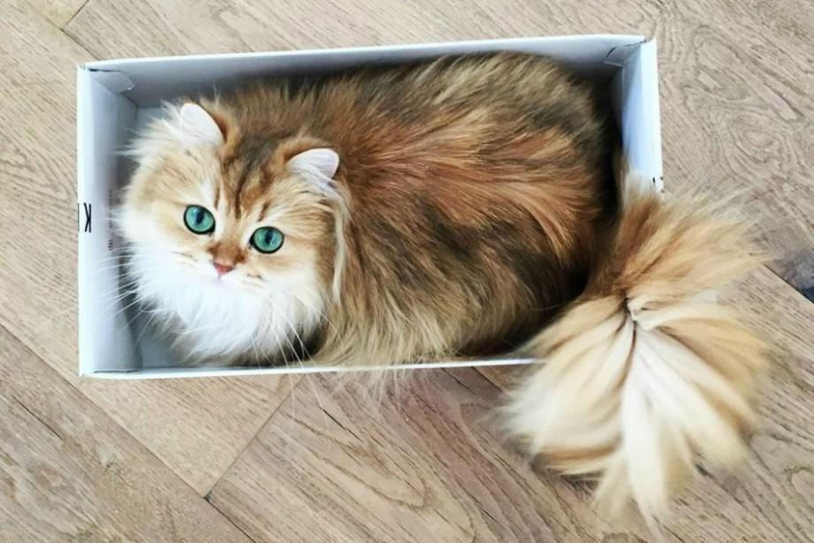 Marketing pufos. De ce publicitatea cu pisici funcționează