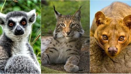 Hai să ne jucăm: Elanul, Lemurul, Tapirul. Cât de bine cunoști animalele sălbatice