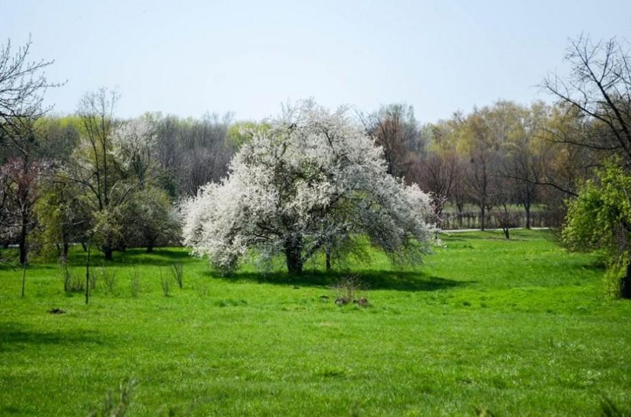 (foto) Cum arată Grădina Botanică la un an de la ninsorile din aprilie 2017 atunci când s-au pierdut 80% din arborii și arbuștii decorativi