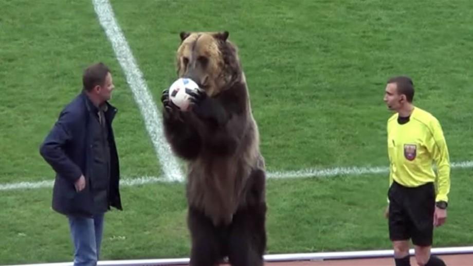 (video) Un urs a deschis un meci din Prima Ligă de fotbal a Rusiei. A înmânat mingea arbitrului principal și a aplaudat