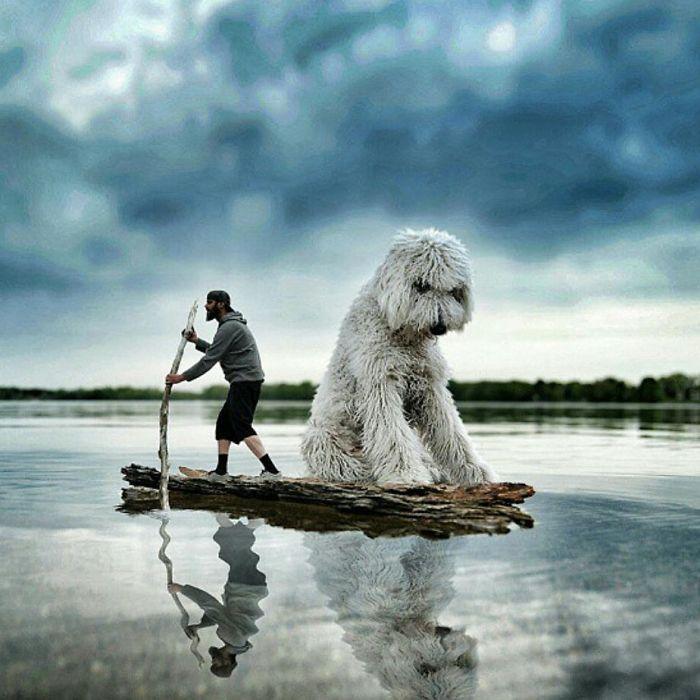 giant-dog-1
