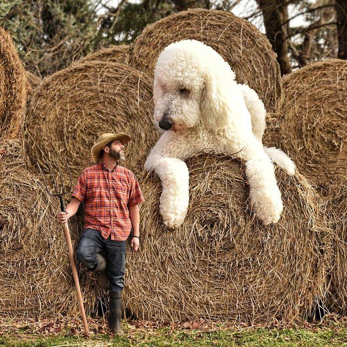 giant-dog-10