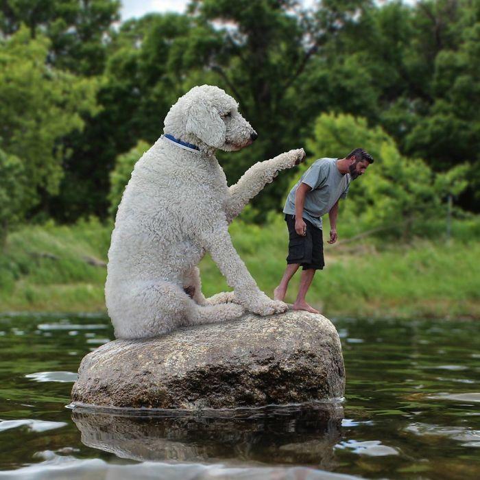 giant-dog-19