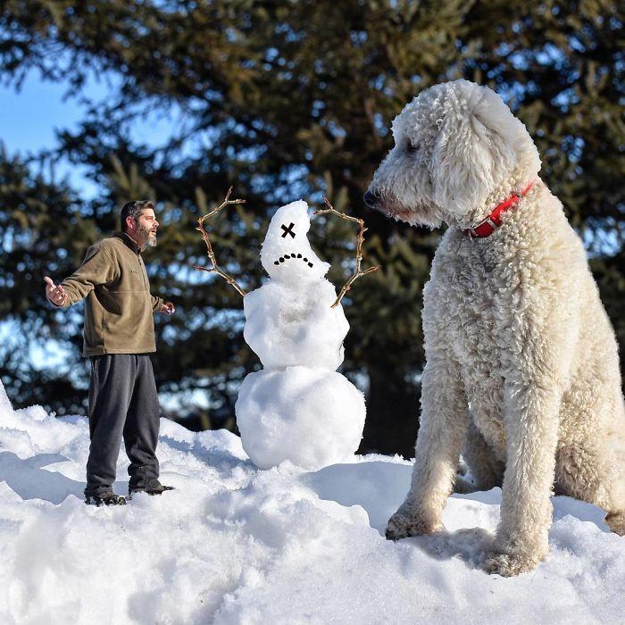 giant-dog-20