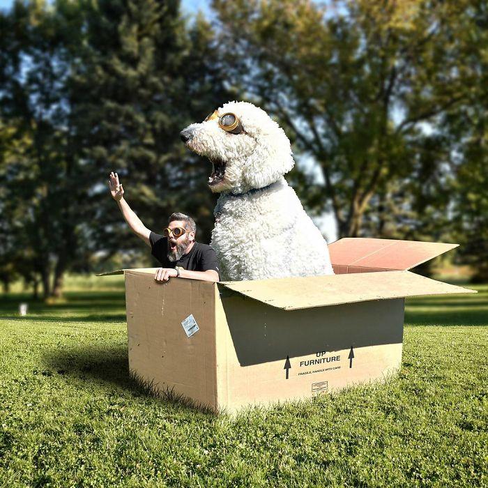 giant-dog-4
