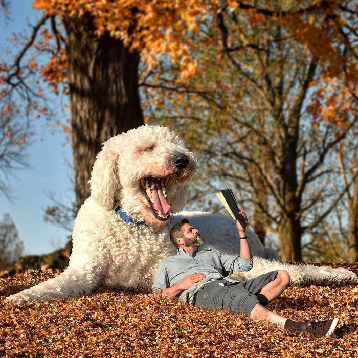 giant-dog-7