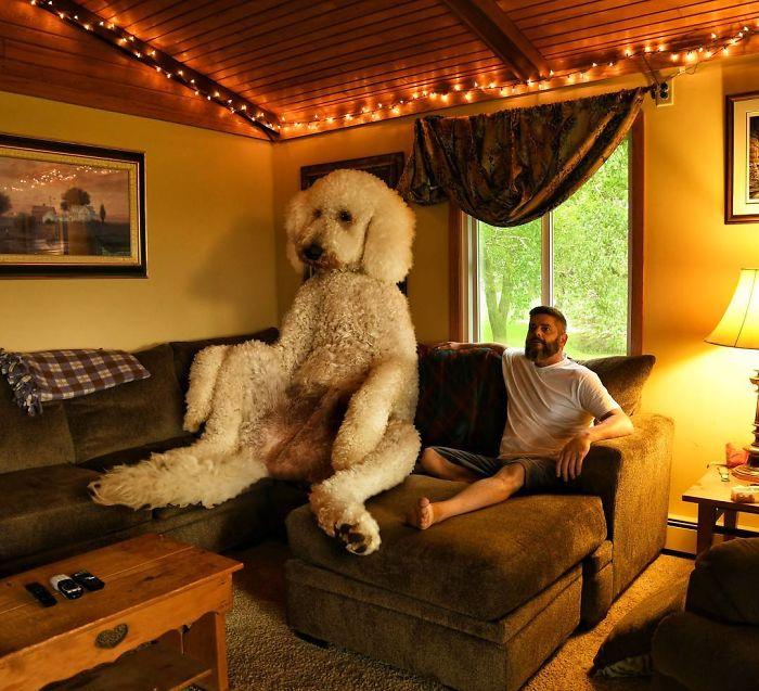 giant-dog-8