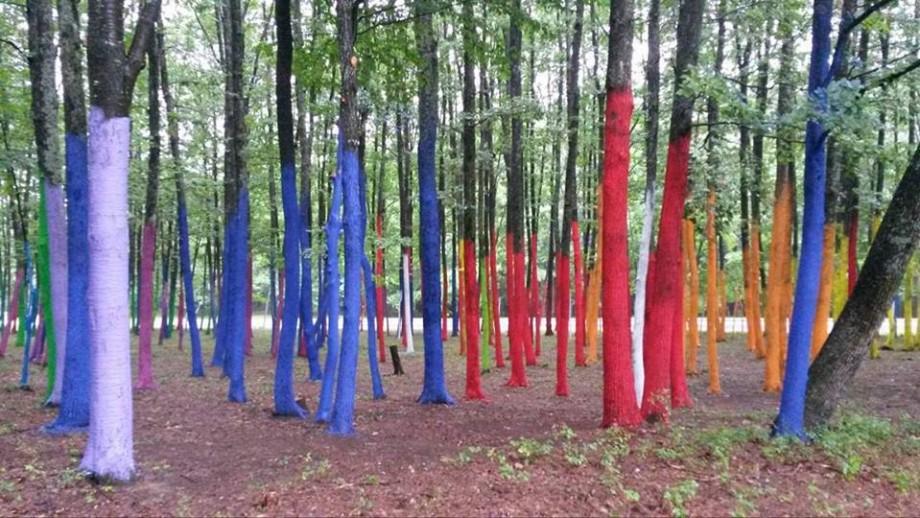 Ar putea fi plantată o pădure dedicată Centenarului Marii Uniri. Unde o vom putea vedea