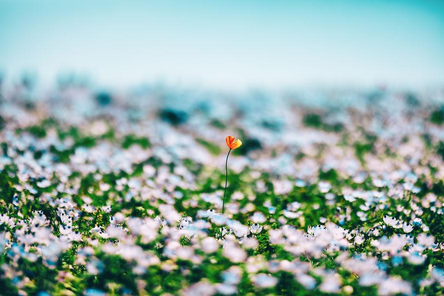 flori albastre11