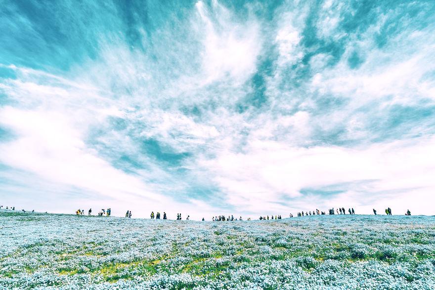 flori albastre89