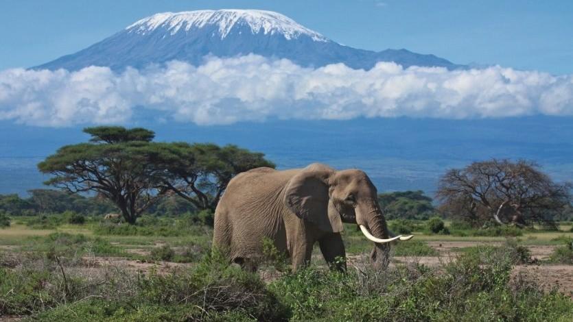 Vrei să filmezi animalele sălbatice și locurile exotice în umbra stratovulcanului Kilimanjaro? Participă la bursa pentru tinerii cameramani și regizori