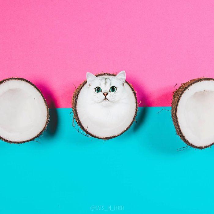 Pisici si mincare17