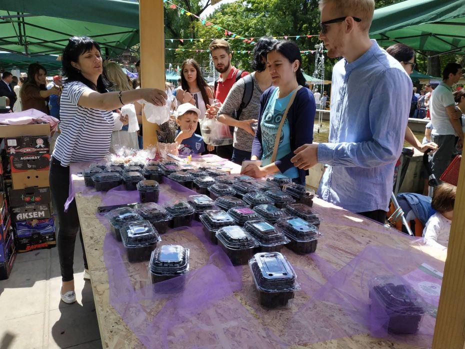 Summer Berry fair 1