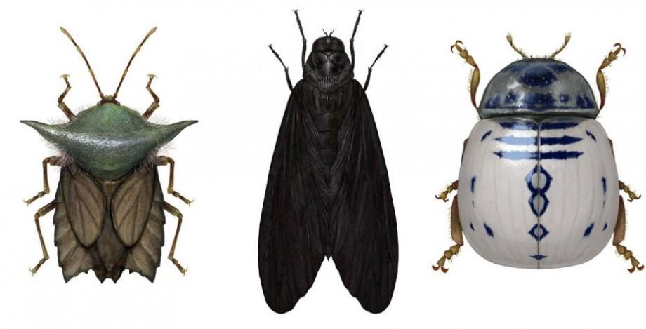 (foto) Maestrul Yoda, Darth Vader sau R2-D2. Cum arată personajele Star Wars ilustrate prin intermediul insectelor