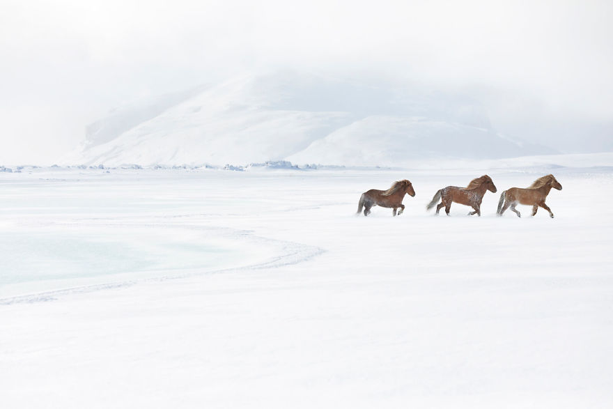 animal-photography-icelandic-horses-in-the-realm-of-legends-drew-doggett-1-5b5afbce48b15__880