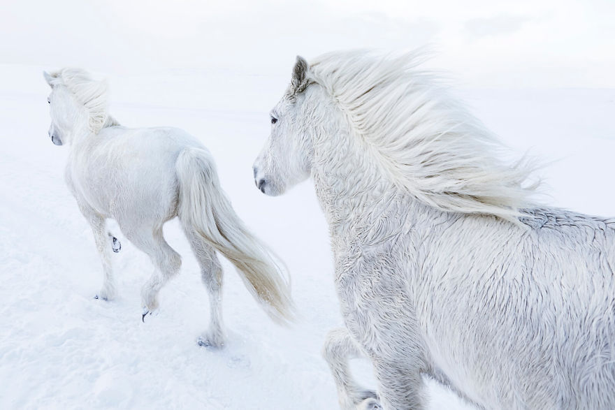 animal-photography-icelandic-horses-in-the-realm-of-legends-drew-doggett-18-5b5afbf13ebb1__880