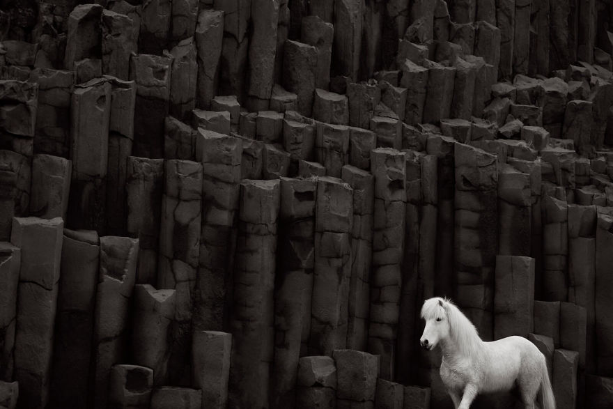animal-photography-icelandic-horses-in-the-realm-of-legends-drew-doggett-22-5b5afbf98ba82__880